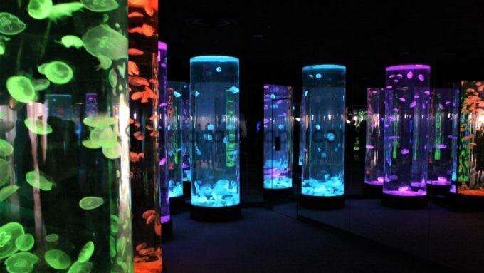 のとじま水族館のクラゲの光アート