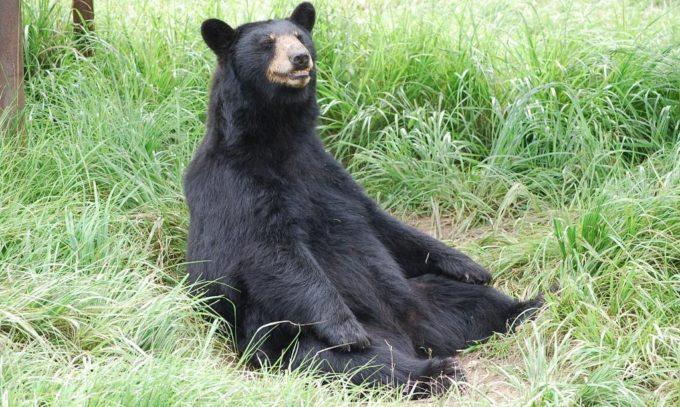 秋吉台自然動物公園「サファリランド」のクマ