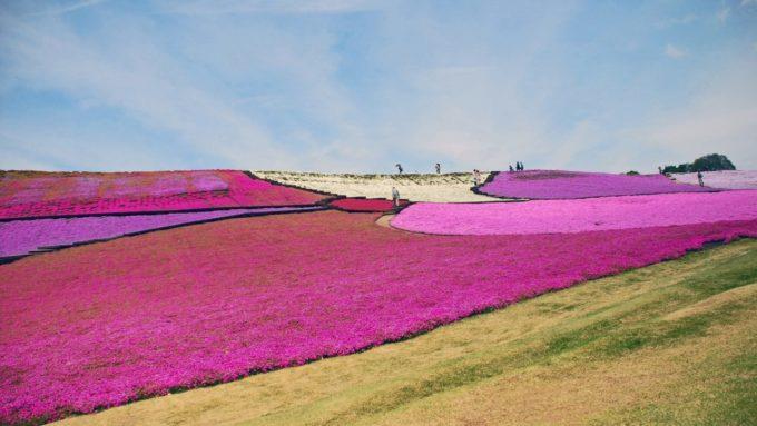 東京ドイツ村の花