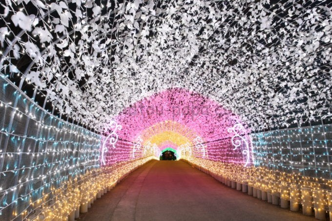 さがみ湖リゾートプレジャーフォレスト「イルミリオン」の光のトンネル
