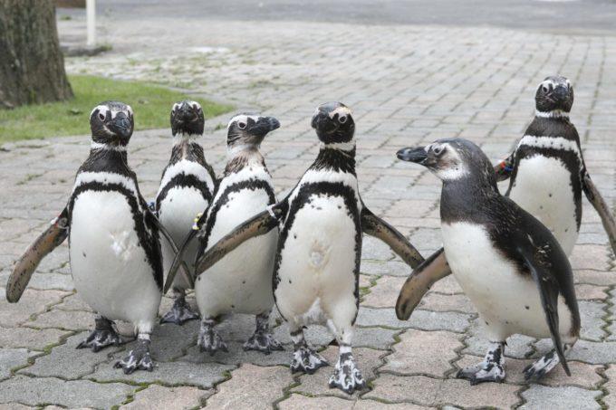 別府ラクテンチのペンギン