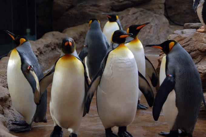 しまね海洋館アクアスのペンギン