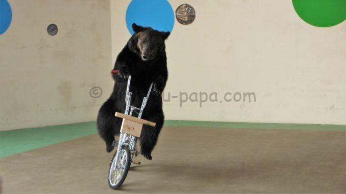 阿蘇カドリー・ドミニオンのクマのショーで自転車に乗るクマ