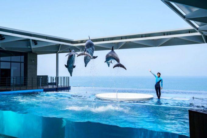 上越市立水族博物館 うみがたりのイルカスタジアム