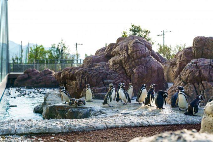 上越市立水族博物館 うみがたりのマゼランペンギン ミュージアム