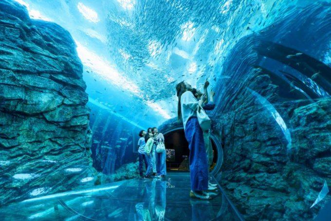 上越市立水族博物館 うみがたりのうみがたりチューブ