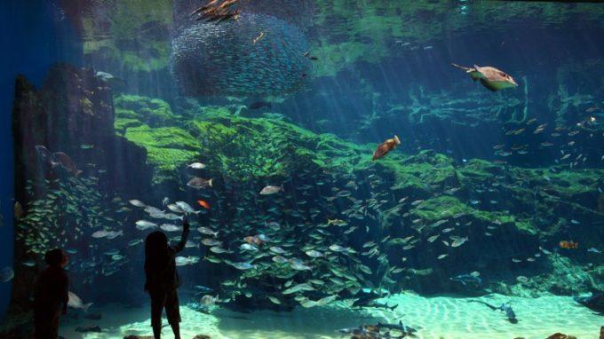 九十九島水族館 海きららの九十九島湾大水槽