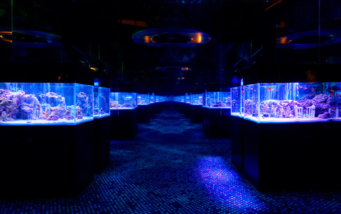 Orbi Yokohama(オービィ横浜)のインフィニットアクアリウム