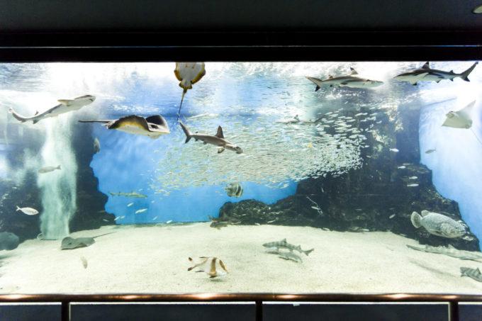 越前松島水族館の海洋館大水槽