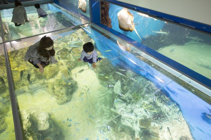 越前松島水族館のサンゴの海
