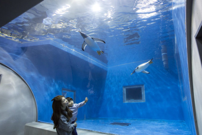 越前松島水族館の水中トンネル