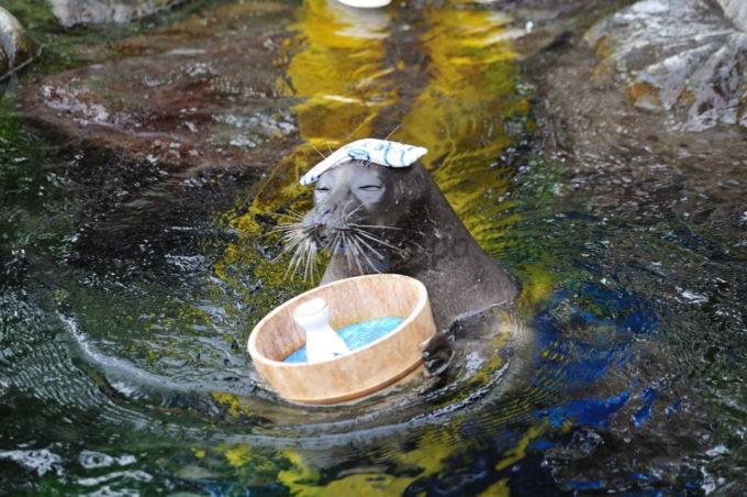 箱根園水族館の温泉に入るアザラシ