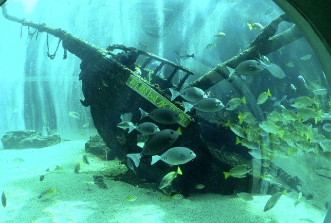 箱根園水族館の沈没船