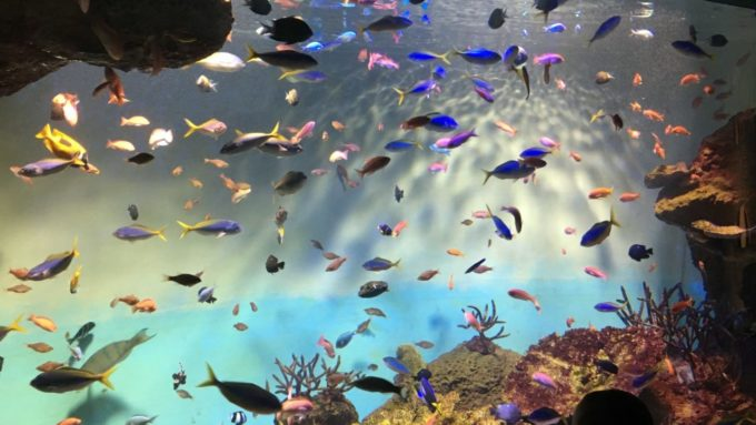 宮島水族館(みやじマリン)のいやしの海