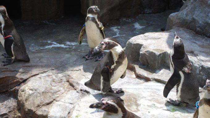 宮島水族館(みやじマリン)のペンギンプール