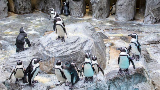 長崎ペンギン水族館の室内にいるペンギン