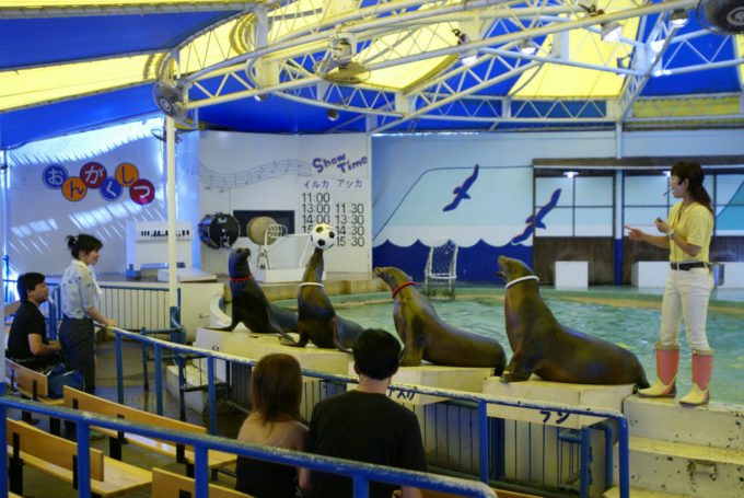 新屋島水族館のアシカショー