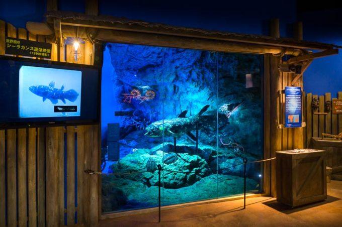沼津港深海水族館 シーラカンス・ミュージアムの古代の海