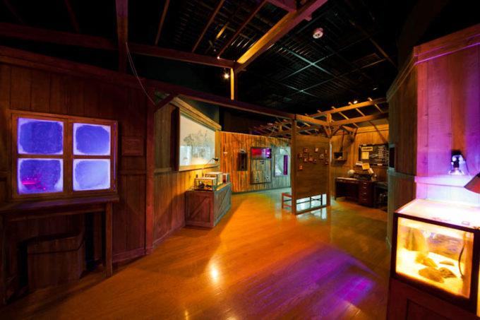 沼津港深海水族館 シーラカンス・ミュージアムの生物の進化研究室