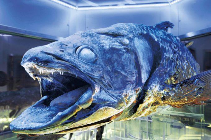 沼津港深海水族館 シーラカンス・ミュージアムの冷凍シーラカンス