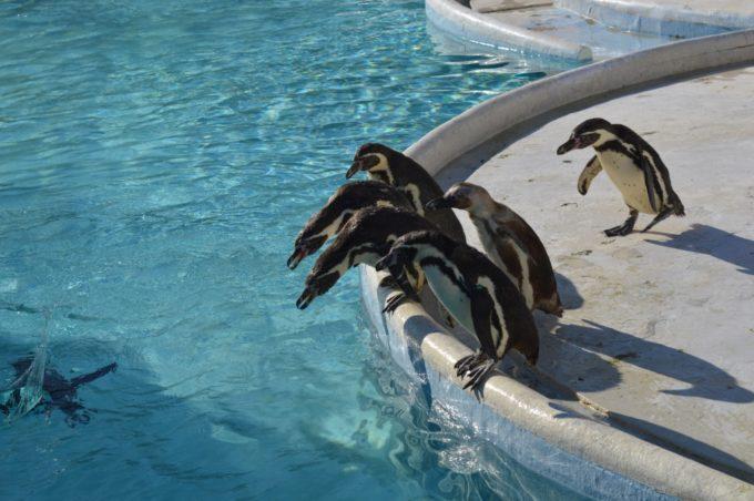 志摩マリンランドのペンギン島