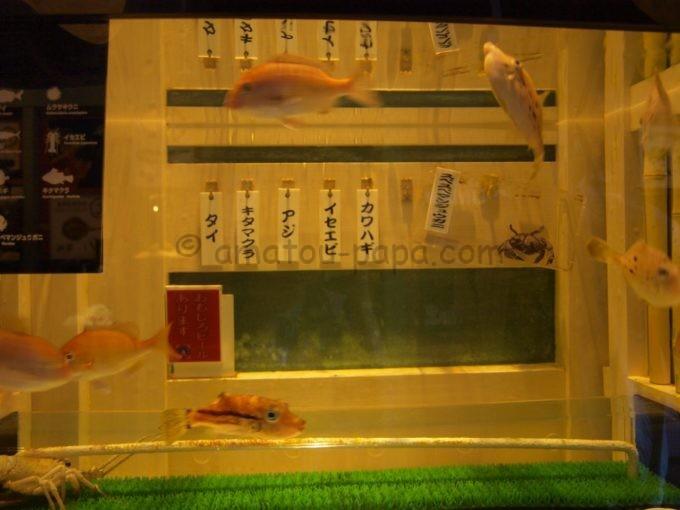 ヨコハマおもしろ水族館の寿司をイメージした水槽