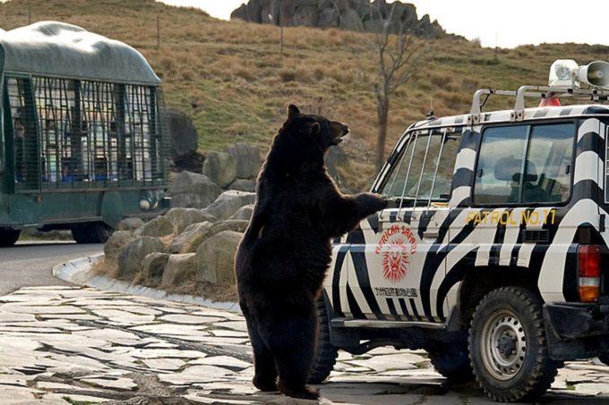 九州自然動物公園アフリカンサファリのクマ