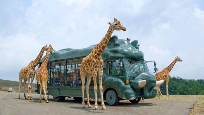 九州自然動物公園アフリカンサファリのキリン