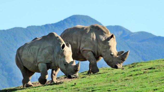 九州自然動物公園アフリカンサファリのサイ