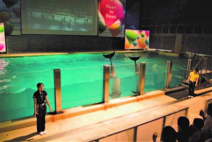 青森県営 浅虫水族館のイルカプール