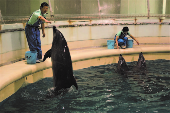 青森県営 浅虫水族館のイルカショー