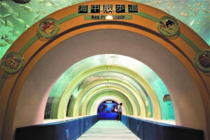 青森県営 浅虫水族館の海中散歩道