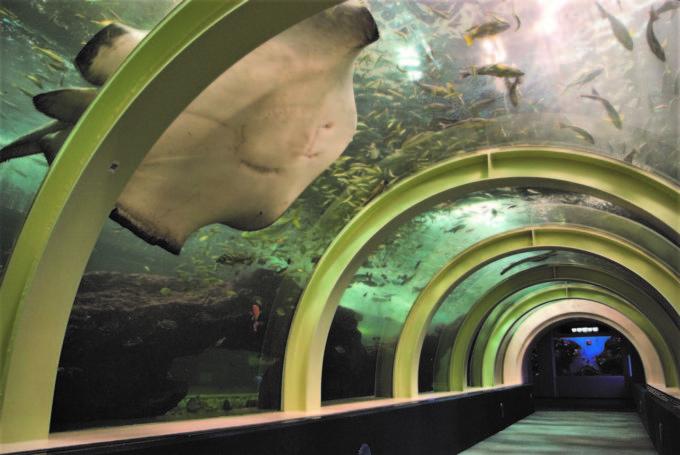 青森県営 浅虫水族館の海中散歩道の中
