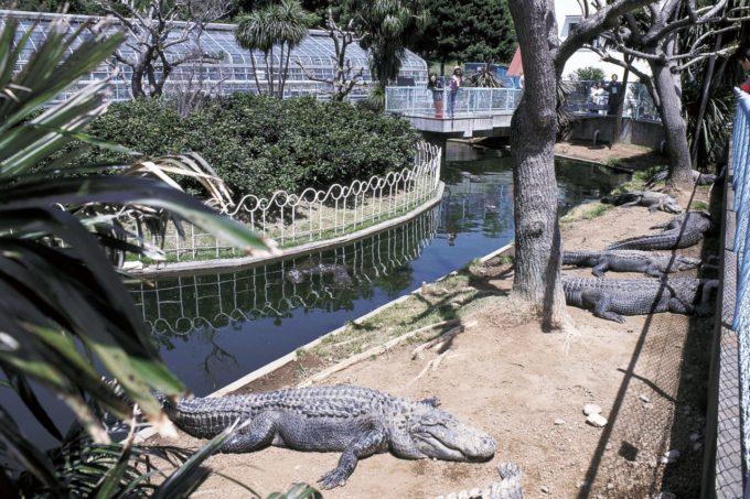 熱川バナナワニ園の雰囲気