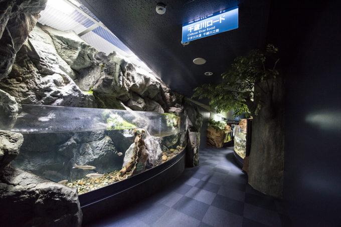 サケのふるさと千歳水族館の千歳川ロード