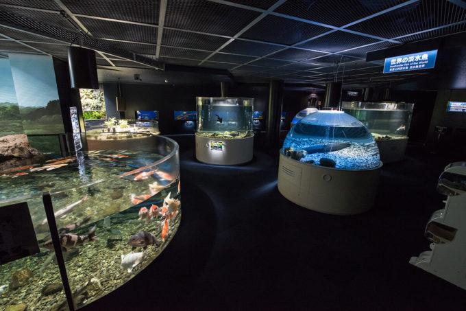 サケのふるさと千歳水族館の世界の淡水魚ゾーン