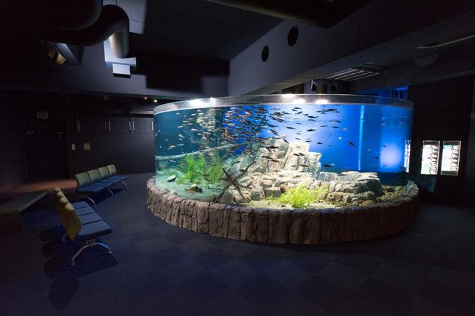サケのふるさと千歳水族館の支笏湖大水槽