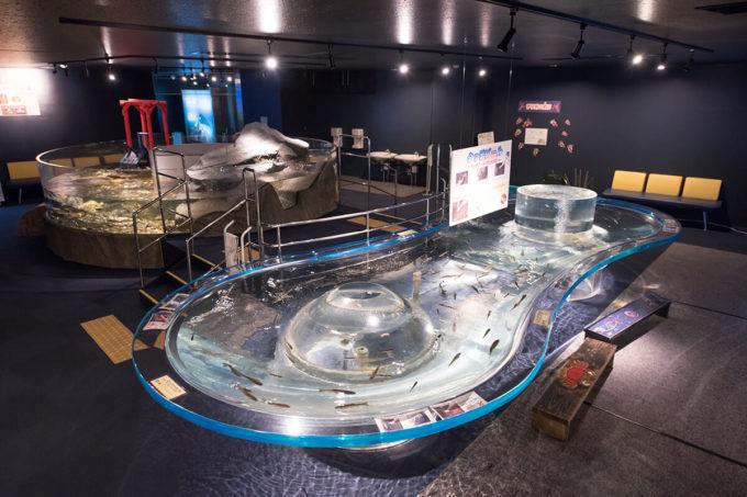 サケのふるさと千歳水族館のタッチプール