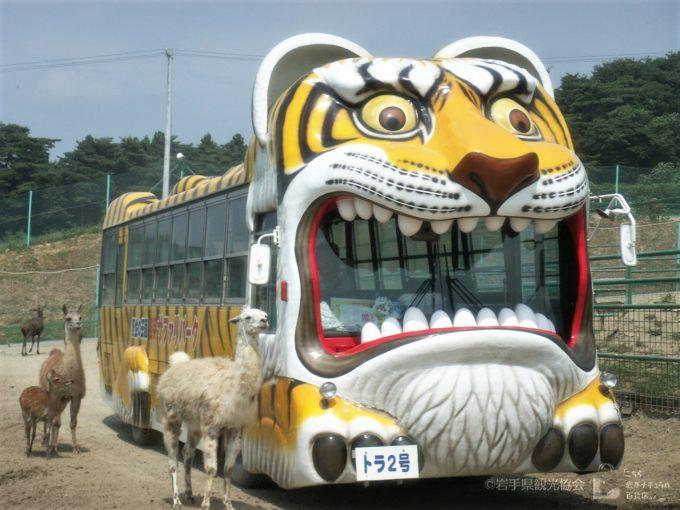 岩手サファリパークのサファリ専用バス