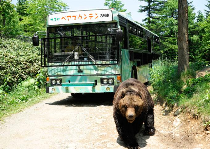 サホロリゾート ベア・マウンテンのクマとバス