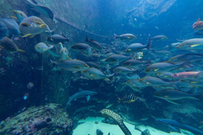 下田海中水族館の魚