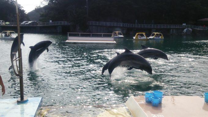 下田海中水族館のジャンプするイルカ