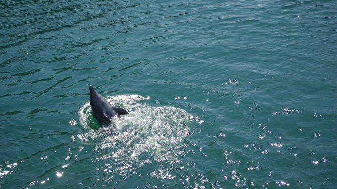 下田海中水族館の泳ぐイルカ