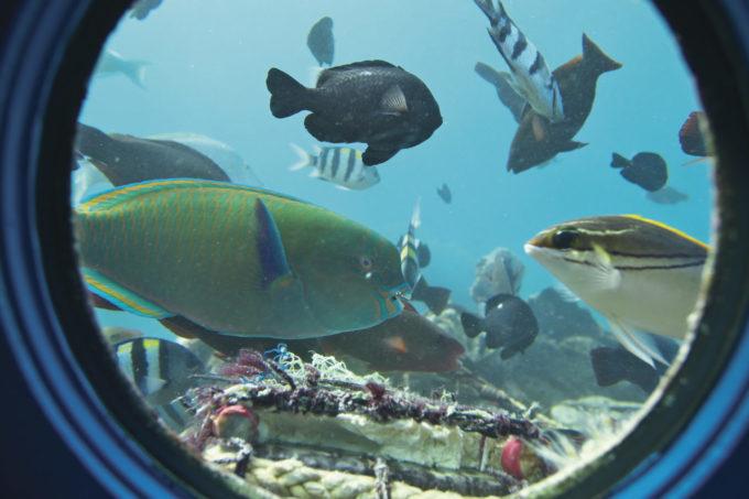 ブセナ海中公園から眺める海底の魚