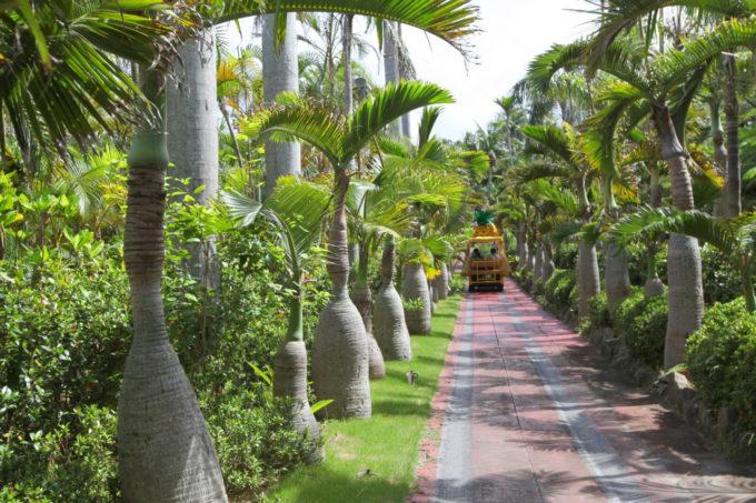 ナゴパイナップルパークの植物園