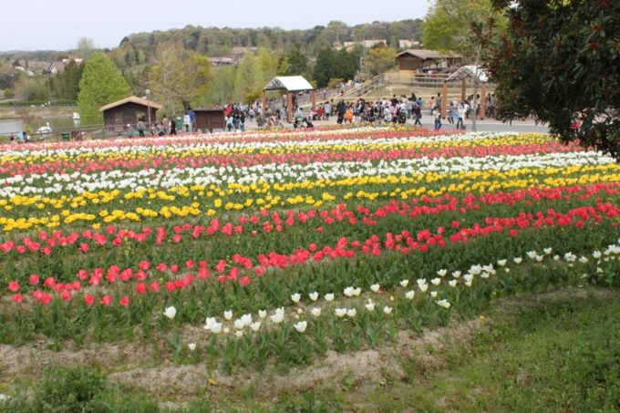 堺・緑のミュージアム ハーベストの丘の花畑