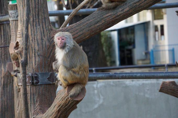 井の頭自然文化園の猿