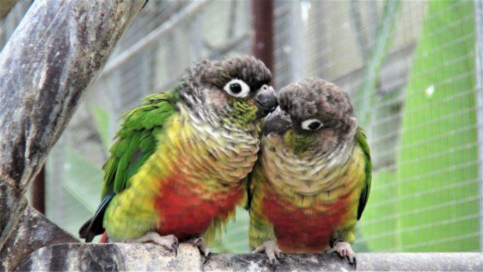 掛川花鳥園の仲良しインコ