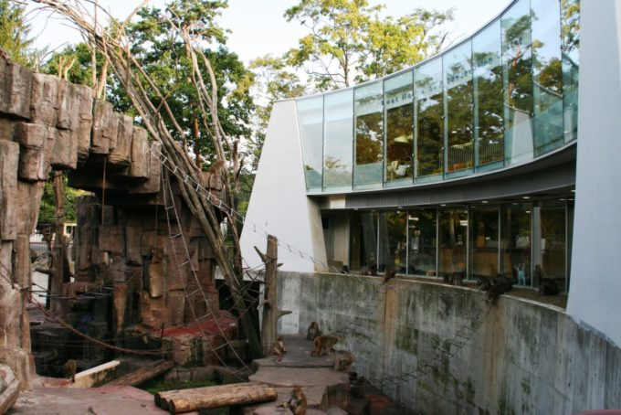 札幌市円山動物園の猿