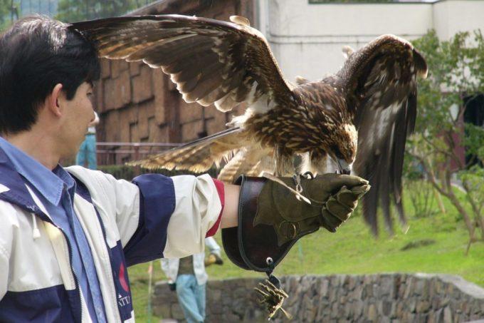 札幌市円山動物園のオオワシ